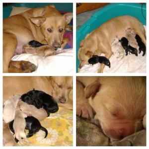 Phoebe and babies